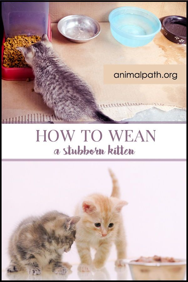 Pin On Cat Care Tips