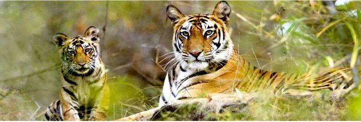 best national park in bharatpur.