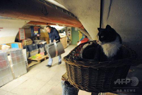 エルミタージュ美術館を守る名物ネコたち、ロシア