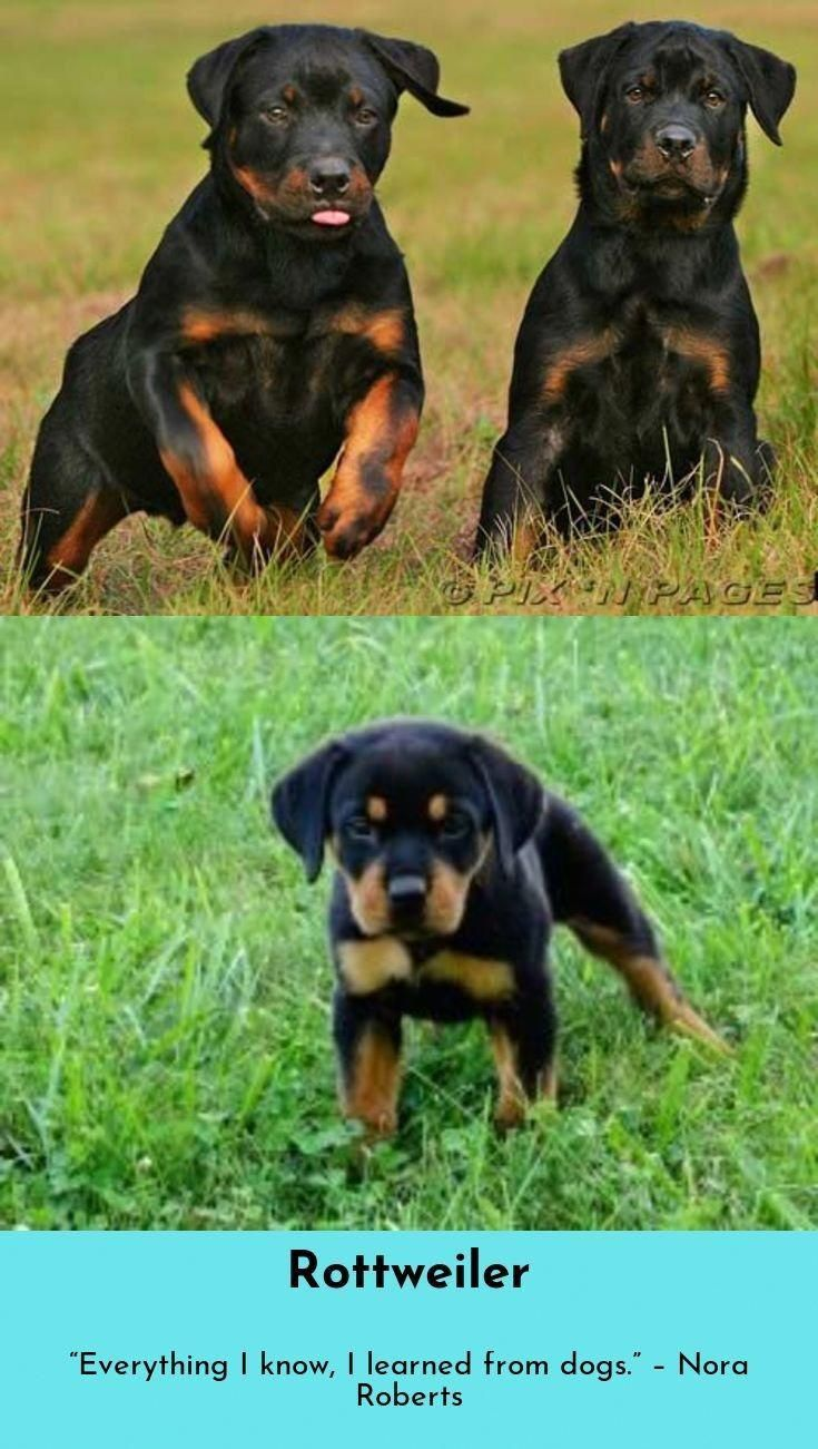 Yorkshire Terriers Are A Small Breed Of Toy Dogs Weighing A Weak