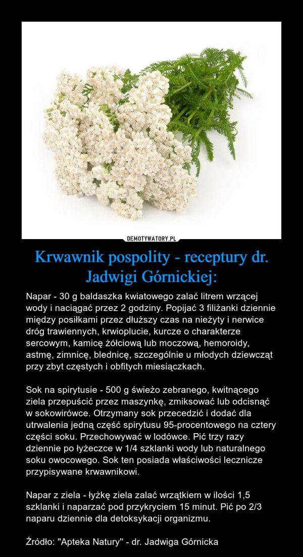 Zastosowania Krwawnika Wedlug Dr Jadwigi Gornickiej Herbs Nature Body