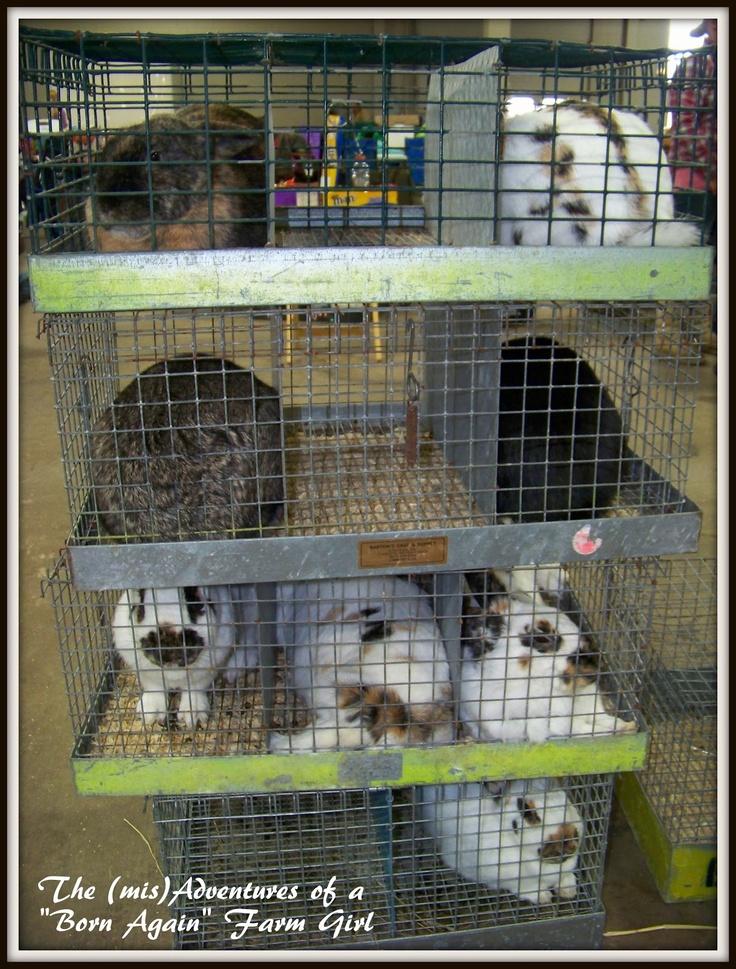 "The (mis)Adventures of a ""Born Again"" Farm Girl: Visiting a rabbit show"