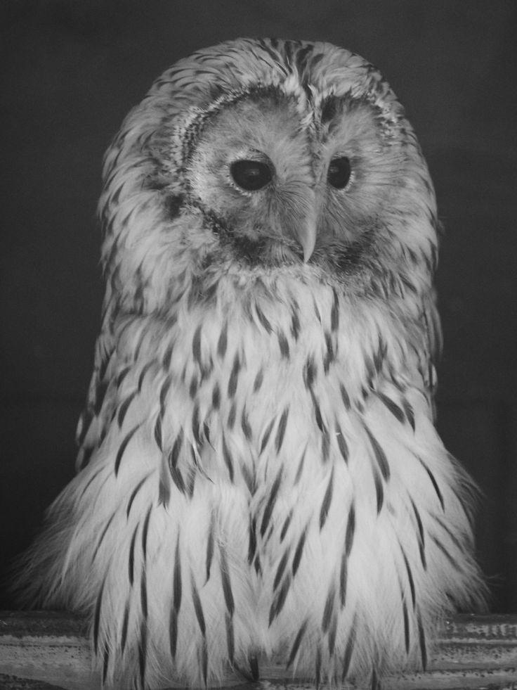 Owl waits day in a shadow by Alexander Polomodov on 500px