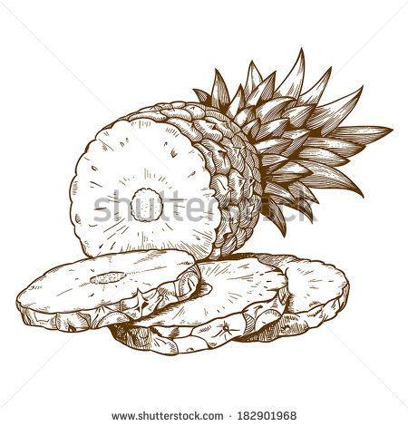 vector engraving illustration of pineapple slices on white background - stock vector