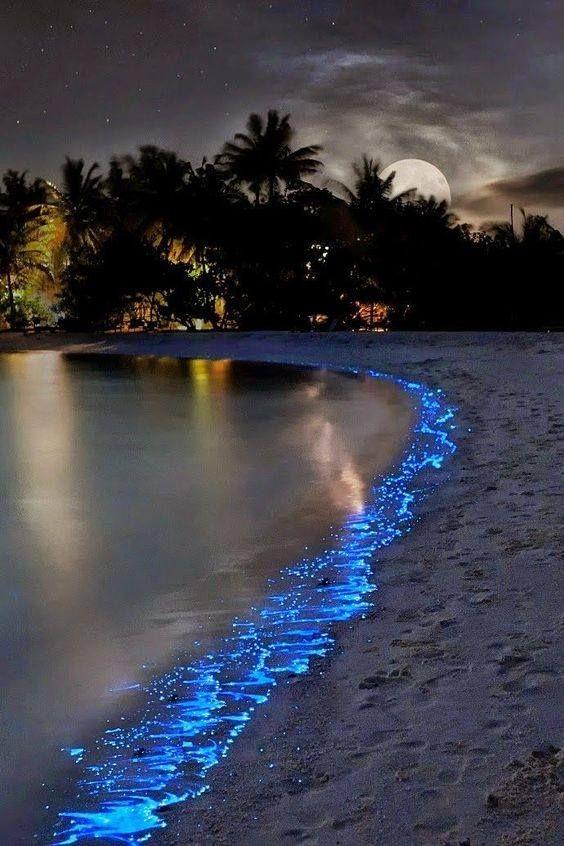 Mar de estrellas en la isla Vaadhoo, Maldivas