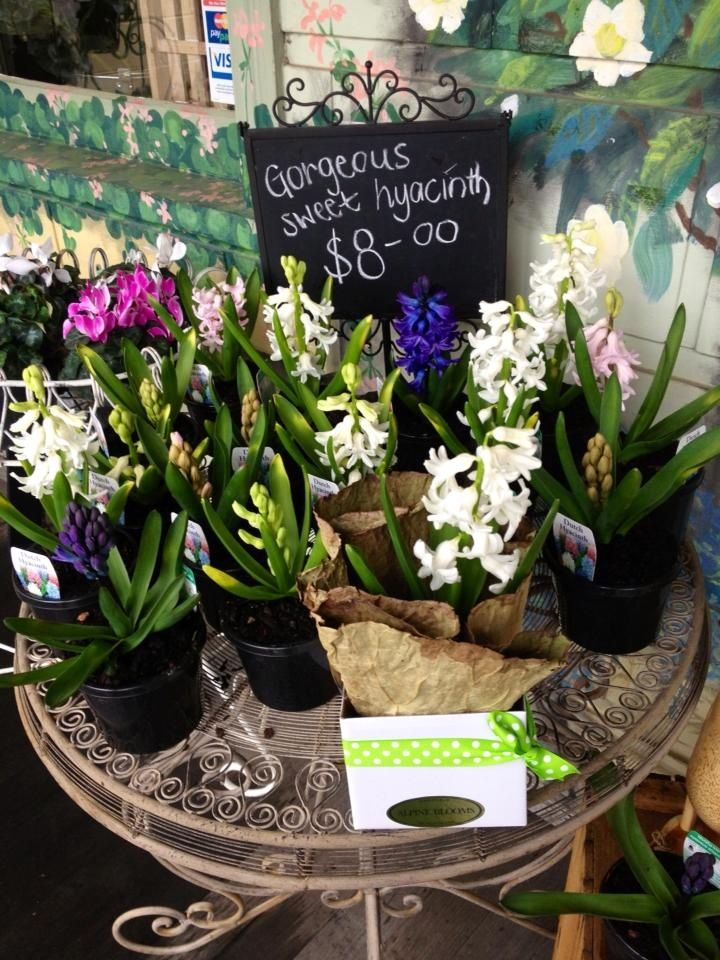 sweetly scented hyacinths