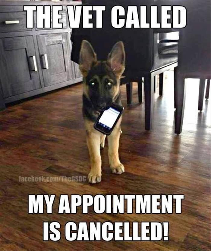 German Shepherds are so smart they know how to use the phone!