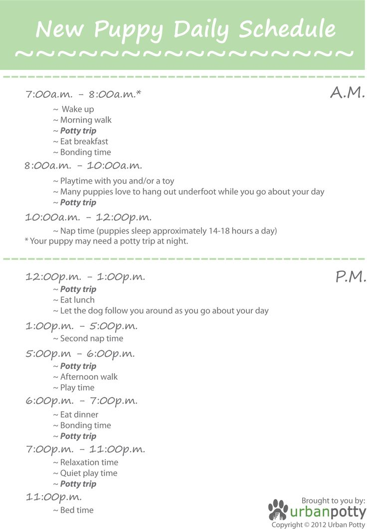 New Puppy Daily Schedule