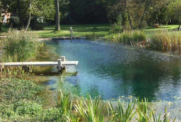how to keep pond water clean naturally