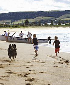 NSW dog-aways
