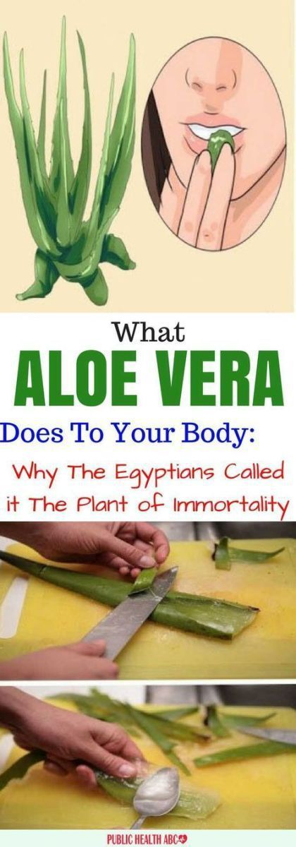 Aloe Vera, also known as Aloe Barbadensis, has become all the rage over the past few years. But, did you know that keeping this decorative interior plant in your home is equally beneficial,…