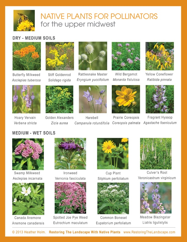 229 best wisconsin native plants images on pinterest for Garden design with native plants