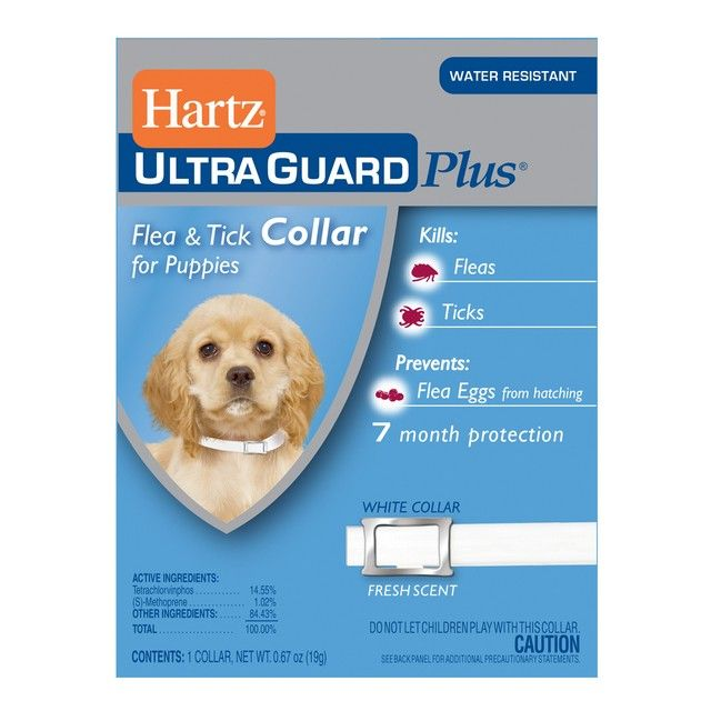 Hartz 0.77 Oz Advanced Care 3 In 1 Control Collar For Pupp #homegoods #homegoodslamps #homesgoods #homegoodscomforters #luxuryhomegoods #homeandgoods #homegoodssofa #homegoodsart #uniquehomegoods #homegoodslighting #homegoodsproducts #homegoodscouches #homegoodsbedspreads #tjhomegoods #homegoodssofas #designerhomegoods #homegoodswarehouse #findhomegoods #modernhomegoods #thehomegoods #homegoodsartwork #homegoodsprices #homegoodsdeals #homegoodslamp #homegoodscatalogues #homegoodscouch…