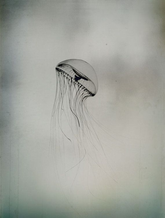Nature Pictures, Underwater Jellyfish Photograph Sea Ocean Black and White Pictures Nature Print