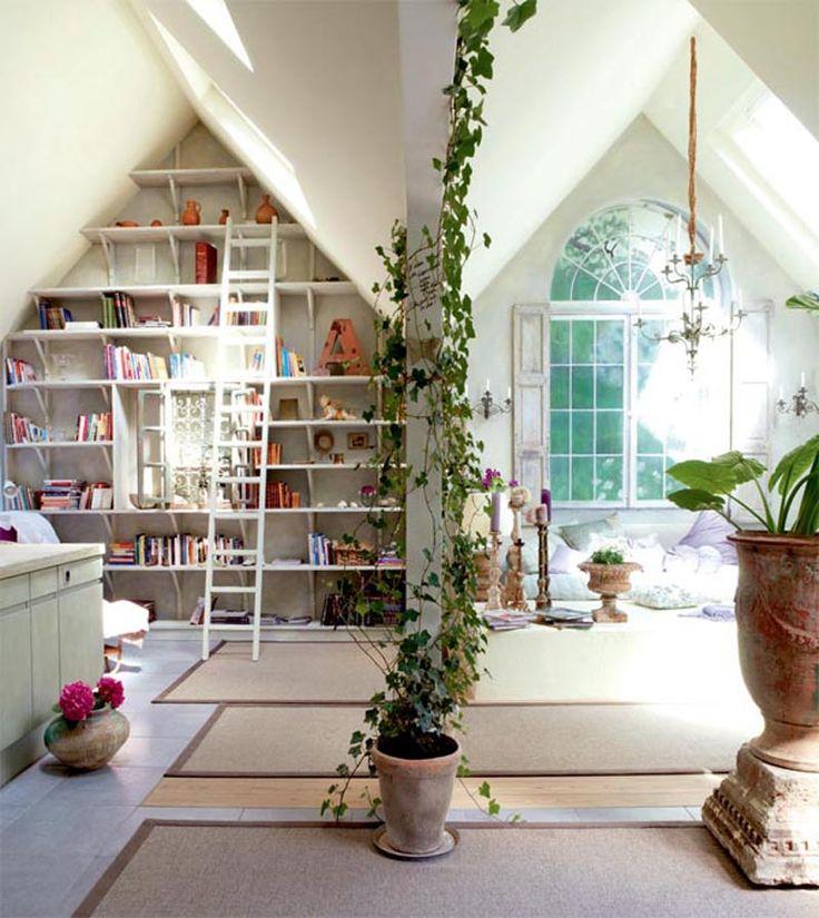 ivy, bookshelf, sunlight