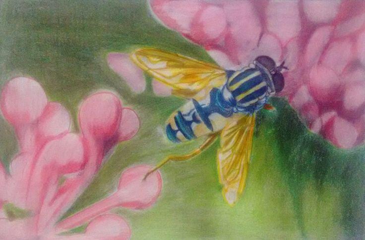 Beautiful Creatures Adult Coloring Book: Bee - Huelish Coloring Books