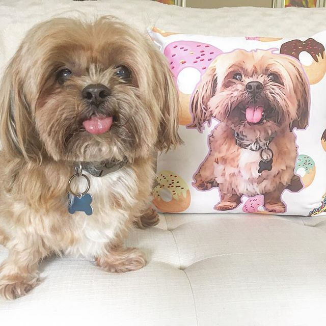 Can I have another COOKIE for my friend??? 🍪🐶Thank you @lifegoespop for the personalized pillow💙🐶💙#puppy #cuteness