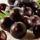 Acai, propiedades y beneficios del consumo de estas bayas ricas en antioxidantes ecoagricultor.com