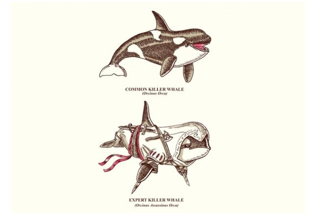 Why be just a killer whale when you could be an expert killer whale?