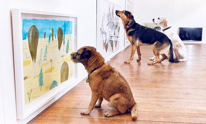 Play More je první interaktivní výstava jen pro psy