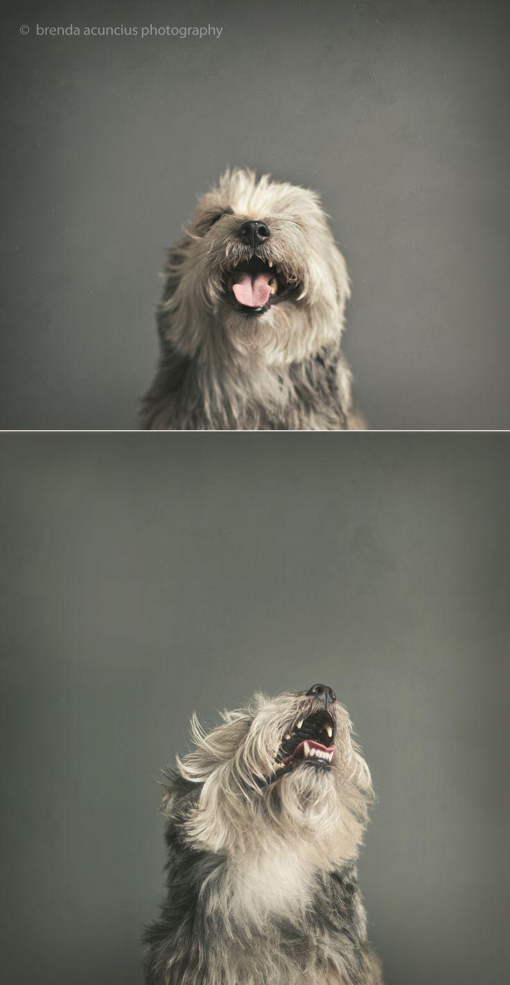 best images about hh pets on pinterest more best
