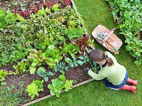 Start Vegetable Garden