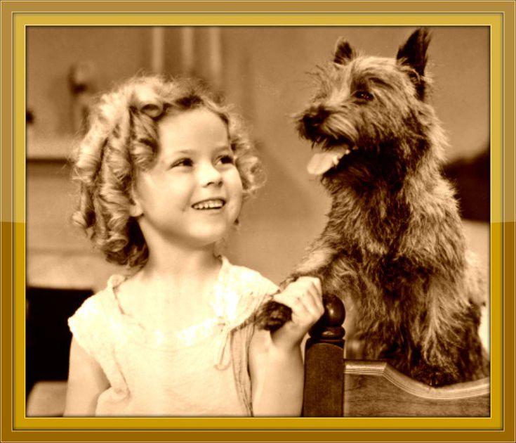 Bright Eyes Shirley Temple Dog
