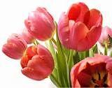 flores-online-sp-comprar-flores-pela-internet