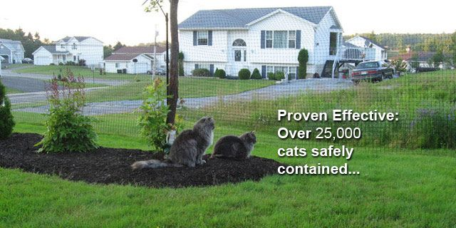 Cats with fence