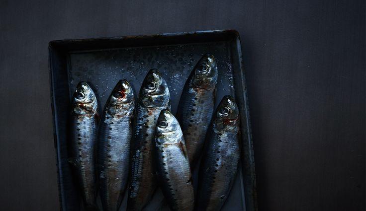Sardines.jpg (1738×1004):