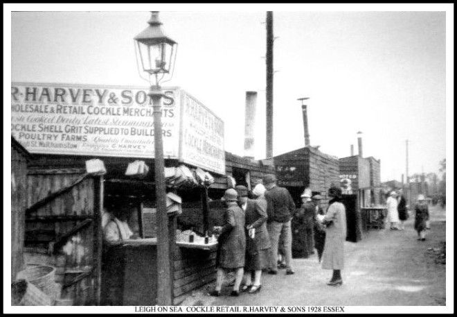 R Harvey, cockle merchant, Leigh on Sea, 1928