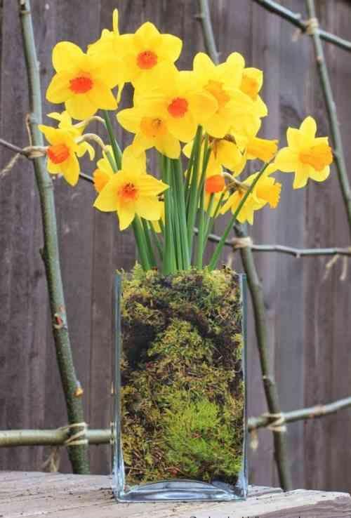 vase avec jonquilles et mousse
