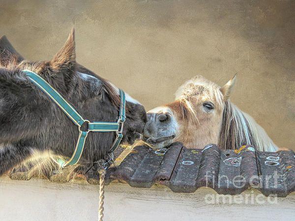 Pin Auf Gypsy Horse