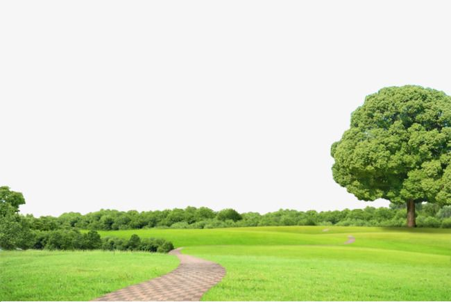 Background Of Nature Nature Background Tree Png Transparent Clipart Image And Psd File For Free Download Marriage Prayer Nature