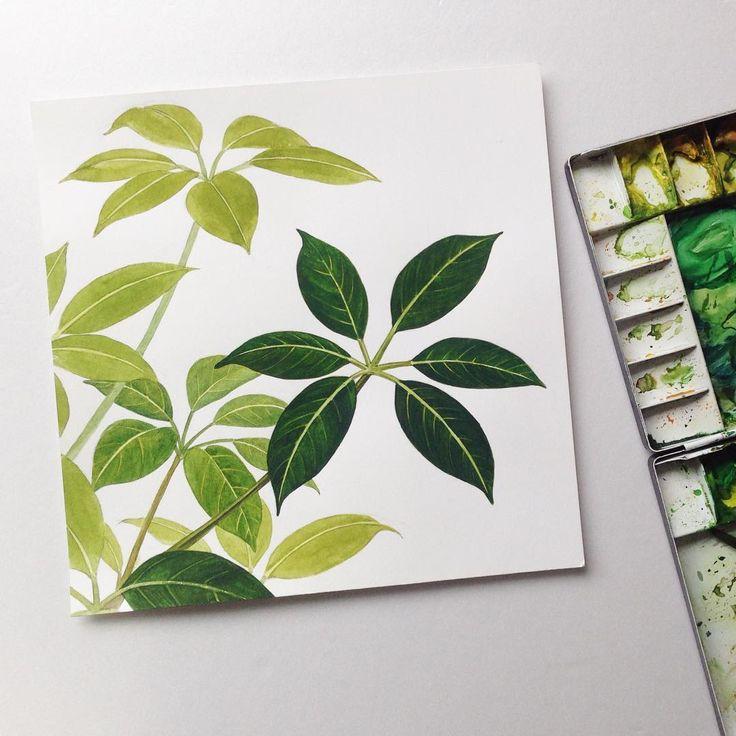 .  홍콩야자 중간과정 . . . #일러스트 #일러스트레이션 #드로잉 #아트 #수채화 #수채화일러스트 #식물 #자연 #식물일러스트 #홍콩야자 #나뭇잎 #관엽식물 #일상 #데일리 #인테리어 #illust #illustration #art #draw #drawing #watercolor #plants #leaf #leaves #nature #daily #green #greenery #interior