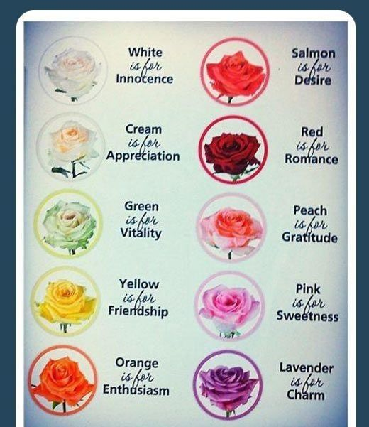 Rose color meanings rose garden pinterest color for Meaning of flower colors