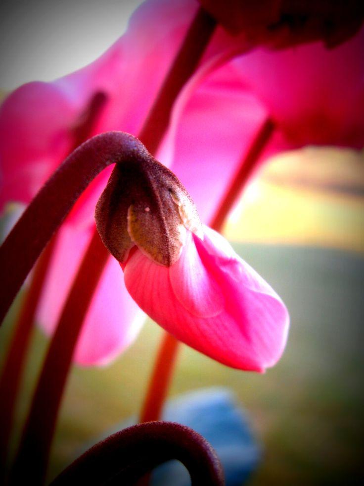 flor de invierno