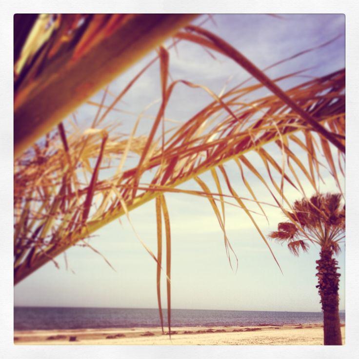 """Season 2014 START! This is Senigallia, """"the velvet Beach""""! BAGNI 77"""