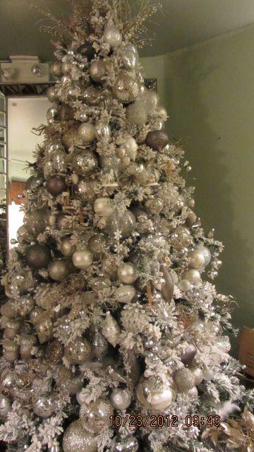 Black-eyed Susan: Christmas