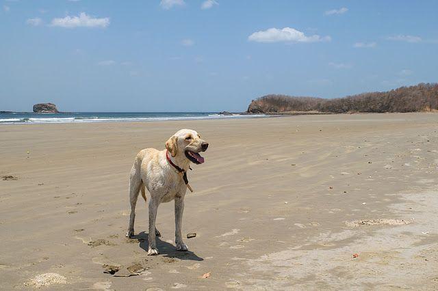 Chien à Playa Hermosa (région de San Juan del Sur, Nicaragua)