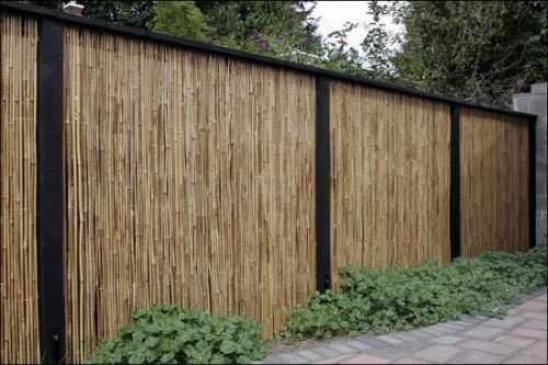 Bamboo fence good alternative to felling trees and very for Cheap garden privacy ideas