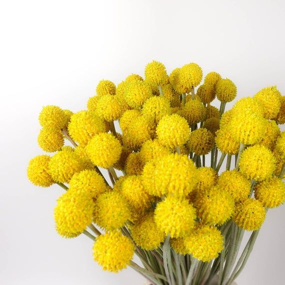 7 Heads Billy Button In Yellow 62cmh Artificial Billy Button Faux Flower Australia Home Party Decor Diy Flower Arranging In 2020 Faux Flowers Billy Buttons Flower Arrangements Diy