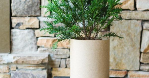 When winter starts to come, lots of people think they have to let their garden die and simply deal with the browns, grays, and occasional whites that come with winter. However, that's not the case! Here are a few winter friendly plants that you can grow in your outdoor... #flowers #garden #plants