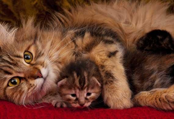 10 Hypoallergenic Cat Breeds. Yes, they DO exist!