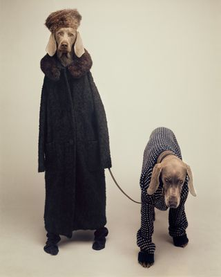 William Wegman, Going Out