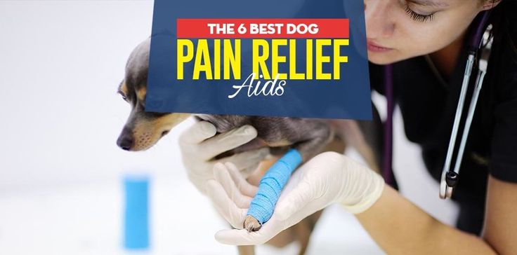 does tramadol help pain in dogs