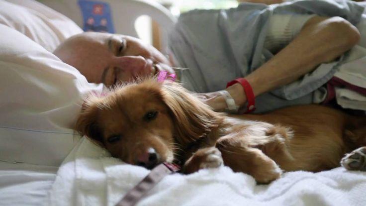 Szeretetet csempésznek a betegek életébe a terápiás kutyák  #kutya #dog #szeretet #love #therapy #kutyabarathelyek #kutyabaráthelyek