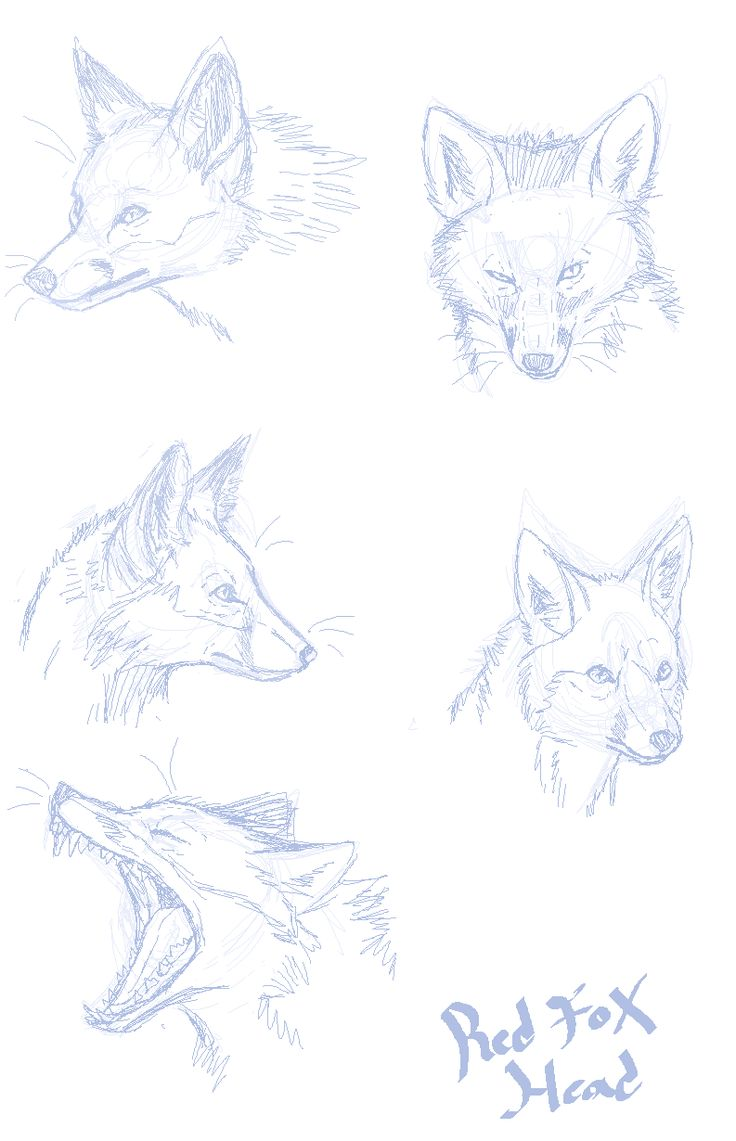 A delightful fuck-ton of foxes. In order to see the text of larger images clearer, you gotta reverse image-search 'em. Sourced by...