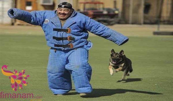 تفسير عضة الكلب في المنام لابن سيرين 2 Best Guard Dog Breeds Guard Dog Breeds German Shepherd Training