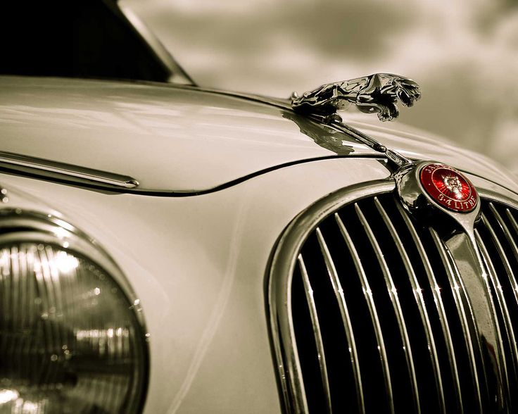 Jaguar:  Radiator Grilled, Sports Cars, Classic Jaguar, First Cars, Classic Cars, Jaguar Cars, Jaguar Automobiles, Caviar Dreams, Dreams Cars